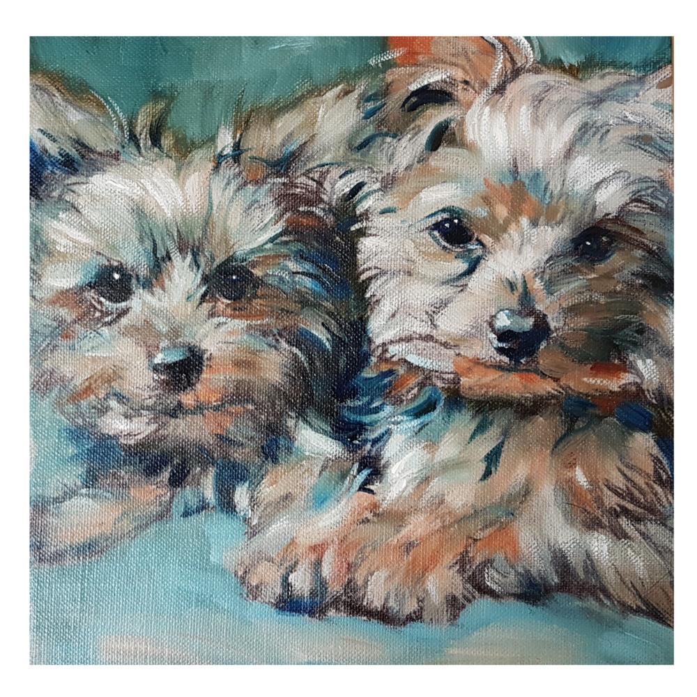 yorkie dog portraits by sue gardner uk 2018.png