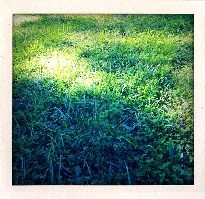 green_grass.jpg