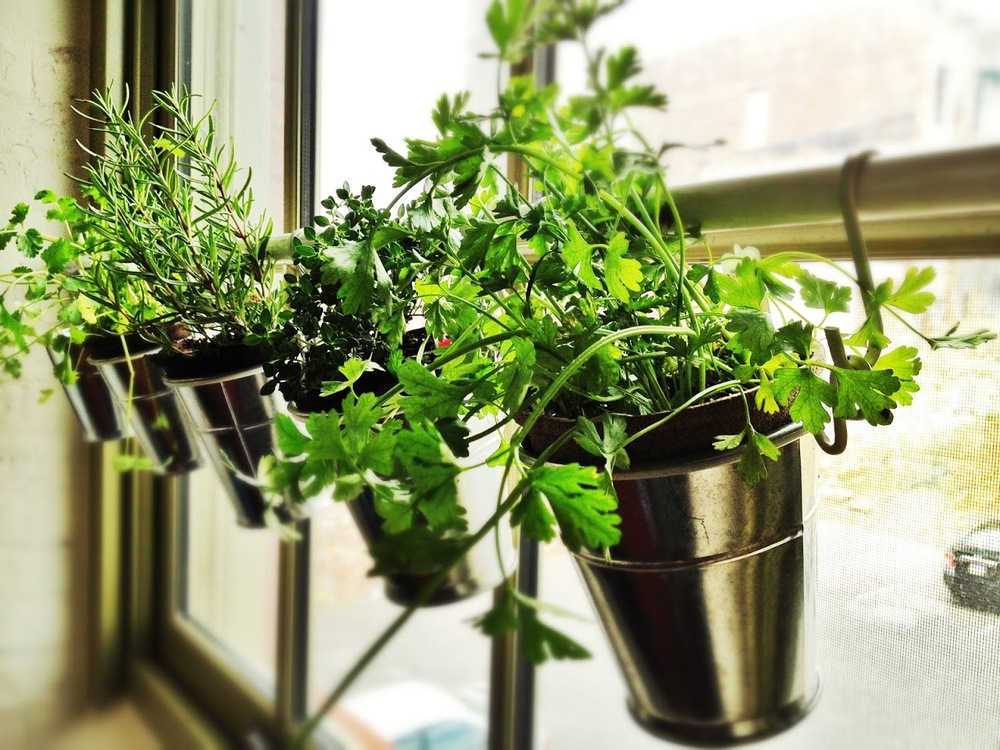 http://jillm.com/2012/04/window-herb-garden-ikea-hack/