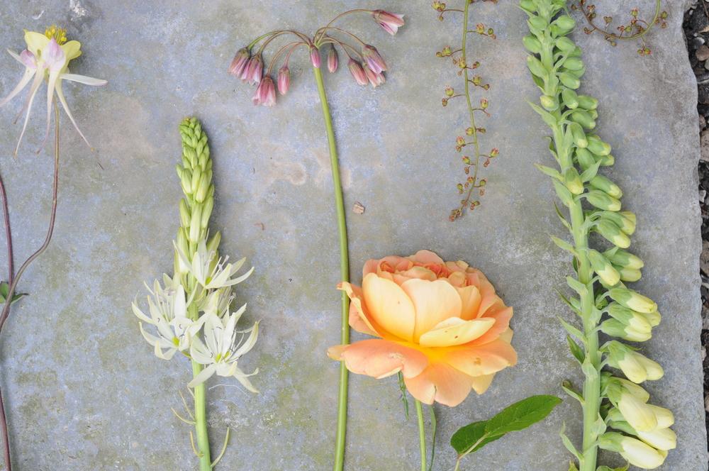 british flowers roe camassia foxglove nectroscordum