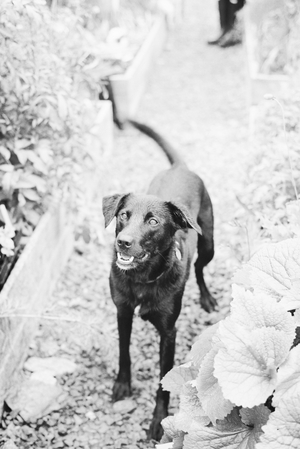 Mabel captured by Taylor & Porter Fine Art Film Photography