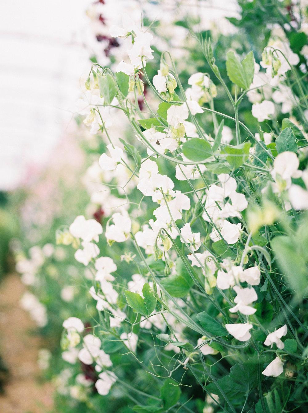 imogenxianathegardengateflowercompany-226.jpg