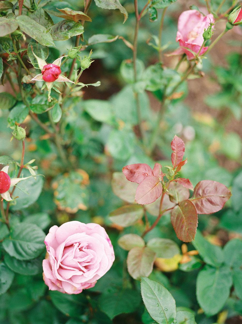 imogenxianathegardengateflowercompany-227.jpg