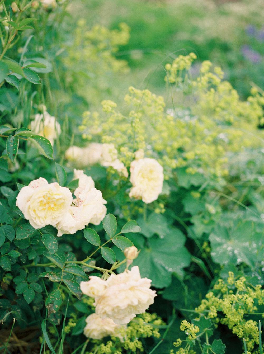 imogenxianathegardengateflowercompany-230.jpg