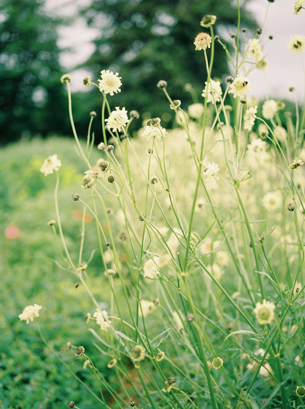 imogenxianathegardengateflowercompany-231.jpg