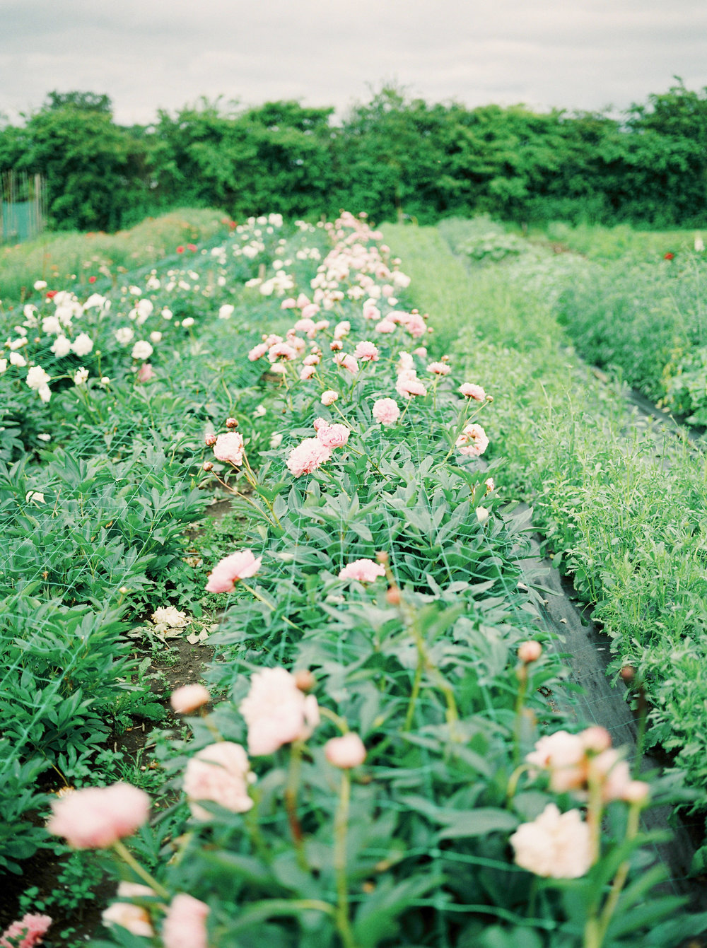imogenxianathegardengateflowercompany-233.jpg