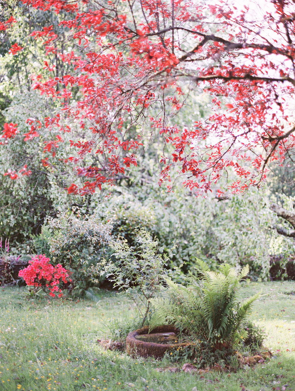 The garden at Botelet Farm