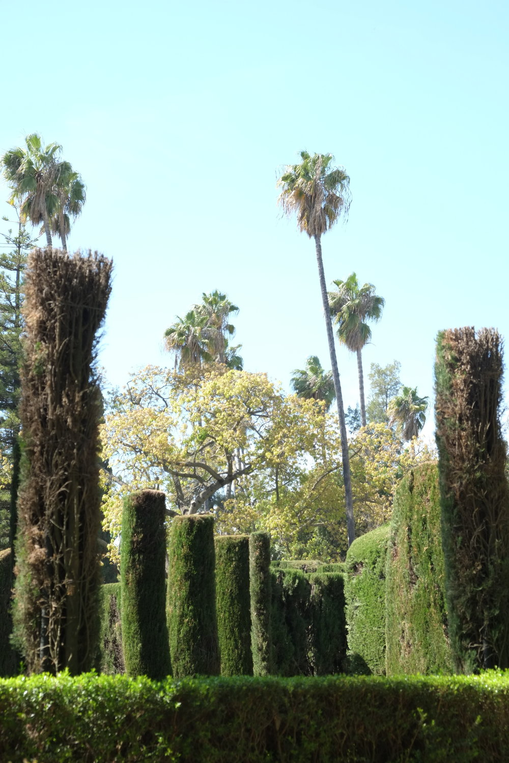 Palm trees of Real Alcazar