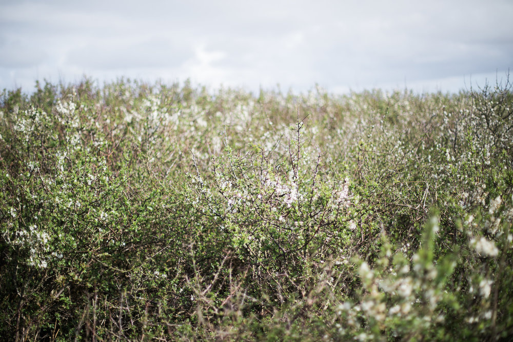 Cornish Hedge by Holes in the World Studio