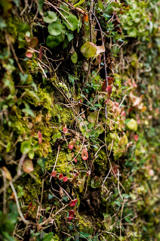 Cornish Hedge at Duchy of Cornwall Nursery