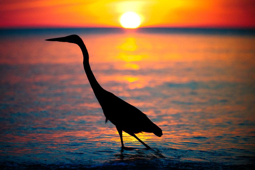 Bird Walk Dusk.jpg
