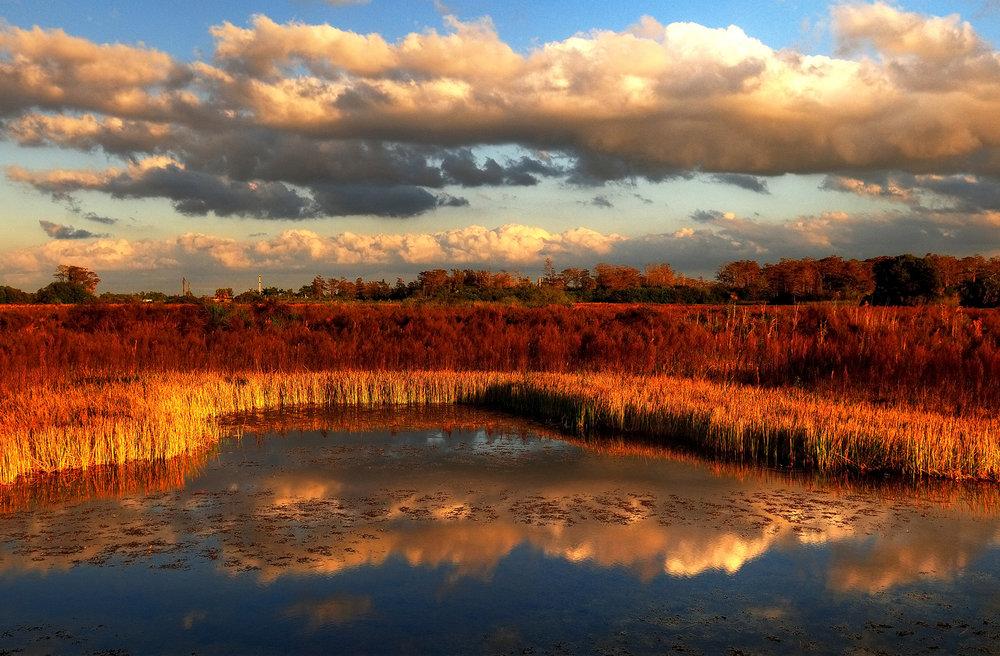 Dry Everglades.jpg