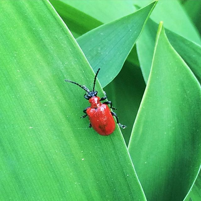 So #little so #cute ....so..red. #bug #bugs #nature #naturelovers #getoutside