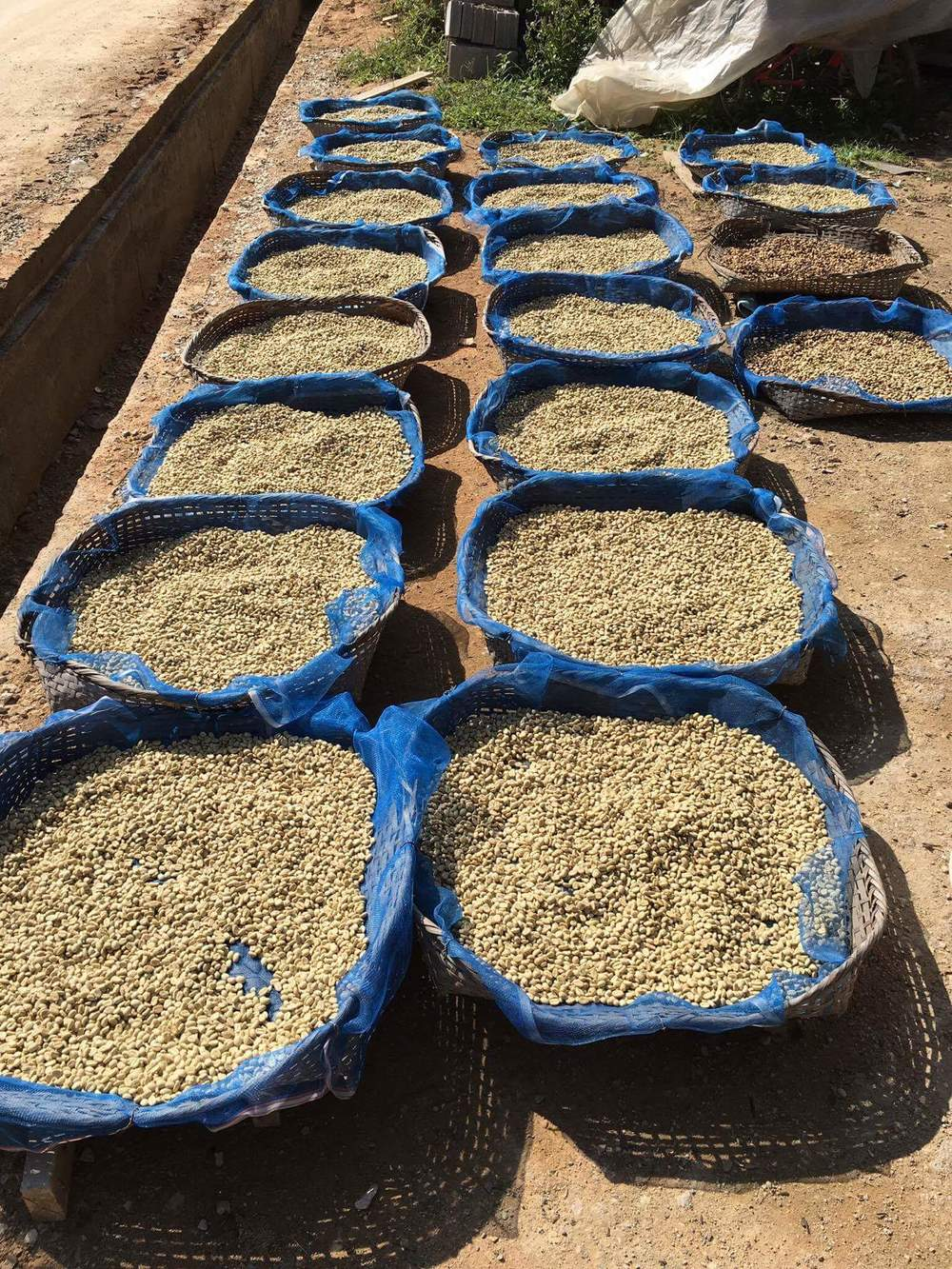 individual farmer lots.
