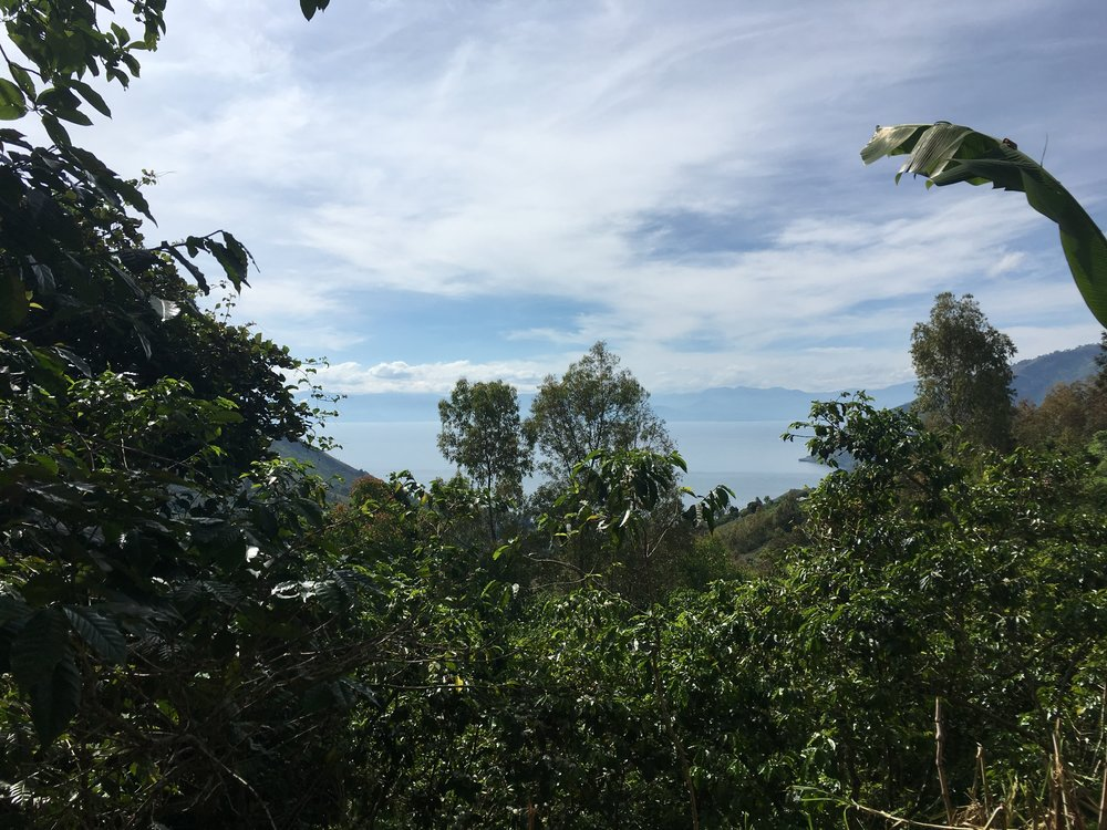 View of lake Kivu from the coffee fields close to Ngula station.