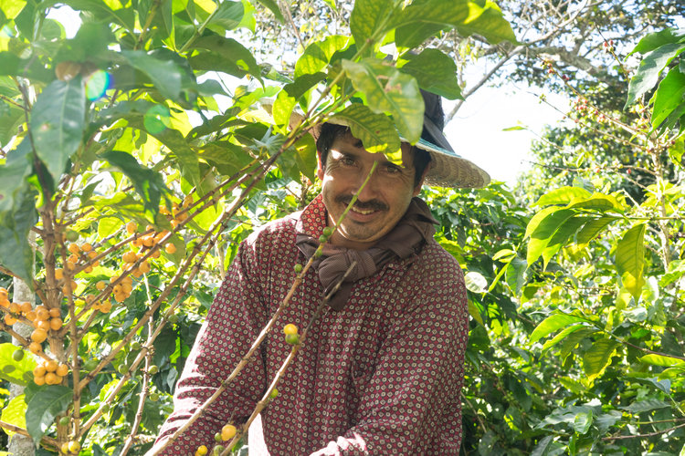 Alfredo's third son. Like his brothers, works on his own farm ; He also collaborates with the monitoring of the processes of benefit of his family's coffee. Almost 1 hectare of coffee land.