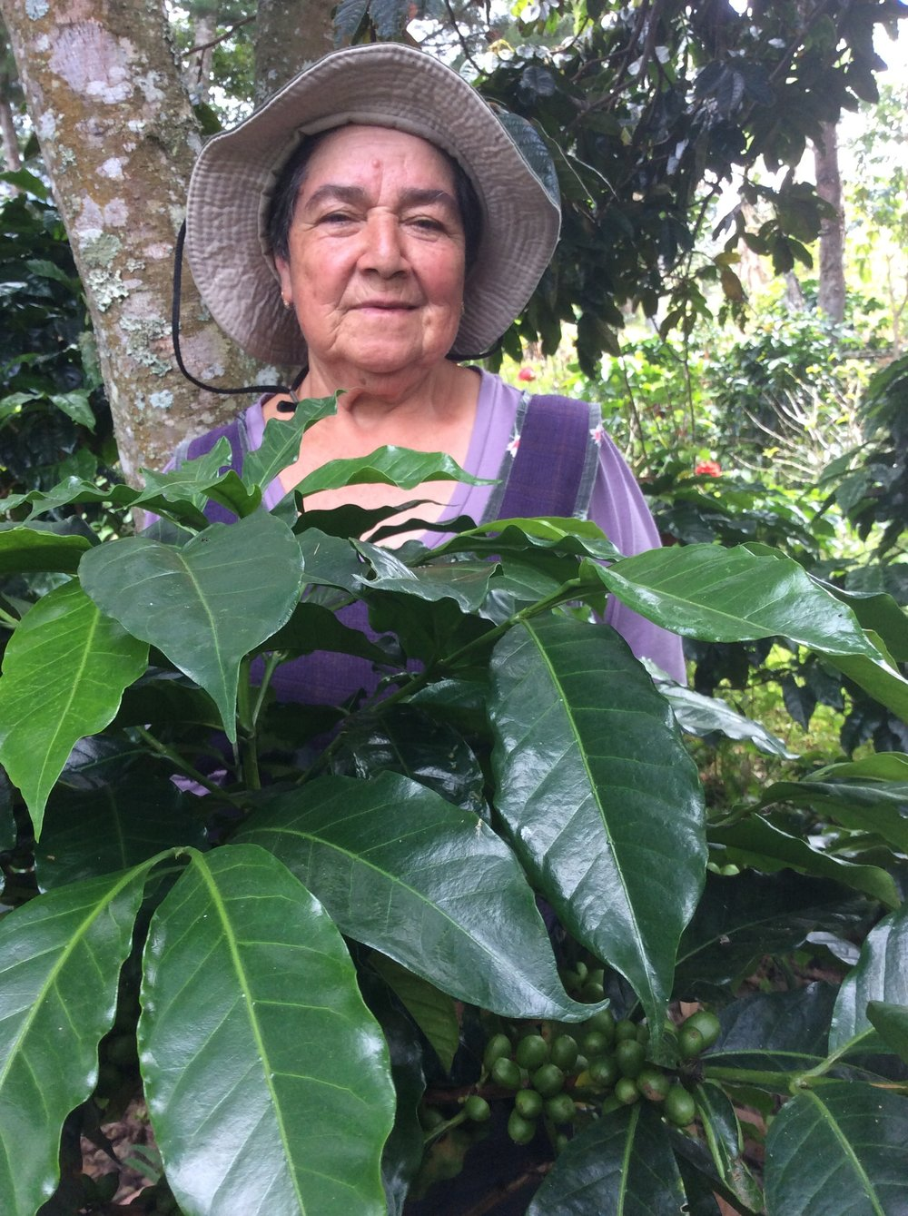 Aunt of Juan Pablo. Mother and head of family, she has cultivated coffee for many years, a product that has been the sustenance of her large family. Dedicated full time to their land and crops.
