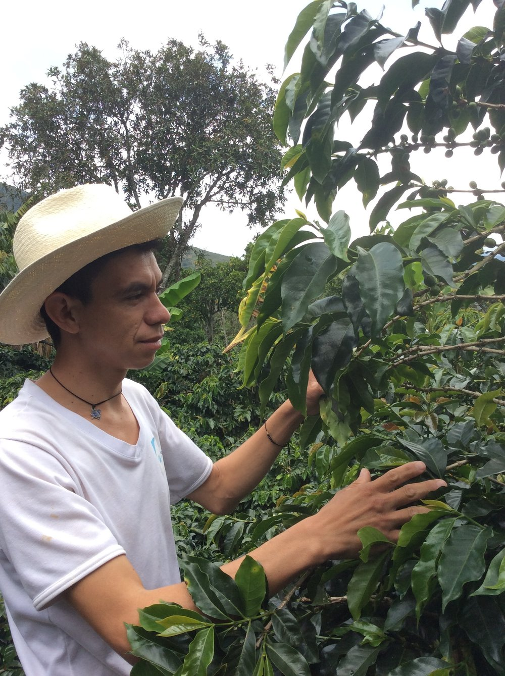 Second highest cupping results this year. A young man who, like almost all the inhabitants of Genoa, follows the tradition of his family in the cultivation of coffee. We're proud to have young producers who believe in coffee in our team.