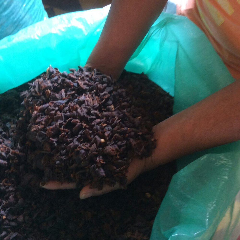 Argote cascara. Juan Pablo's tireless experimentation has led to a product that is sought after throughout Europe.