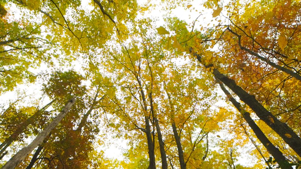 SDC_Trees_No blur copy.png