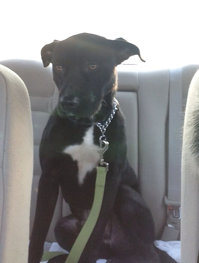 Bruce on his way to his foster family!