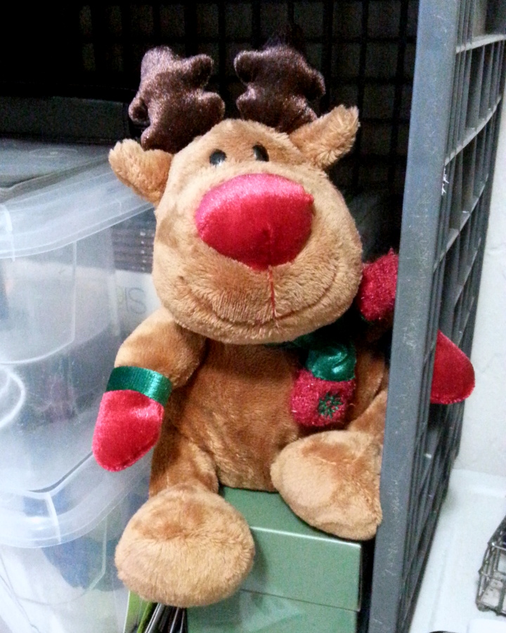 Sydney, the Christmas moose always makes me smile