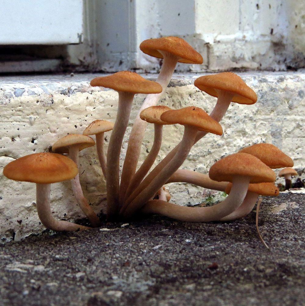 tiny shrooms 3 kathy van kleeck.JPG