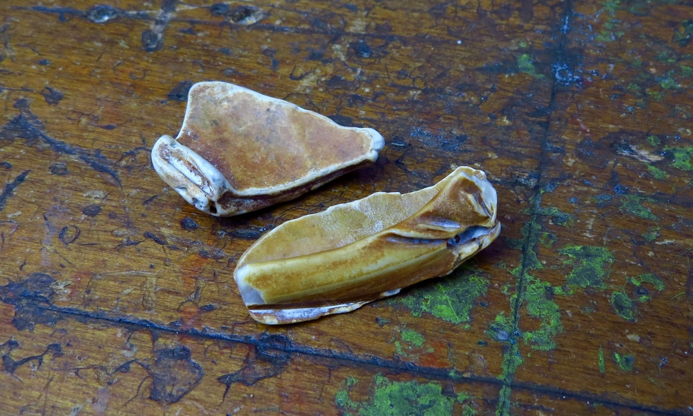... and the warm tones of these shell fragments
