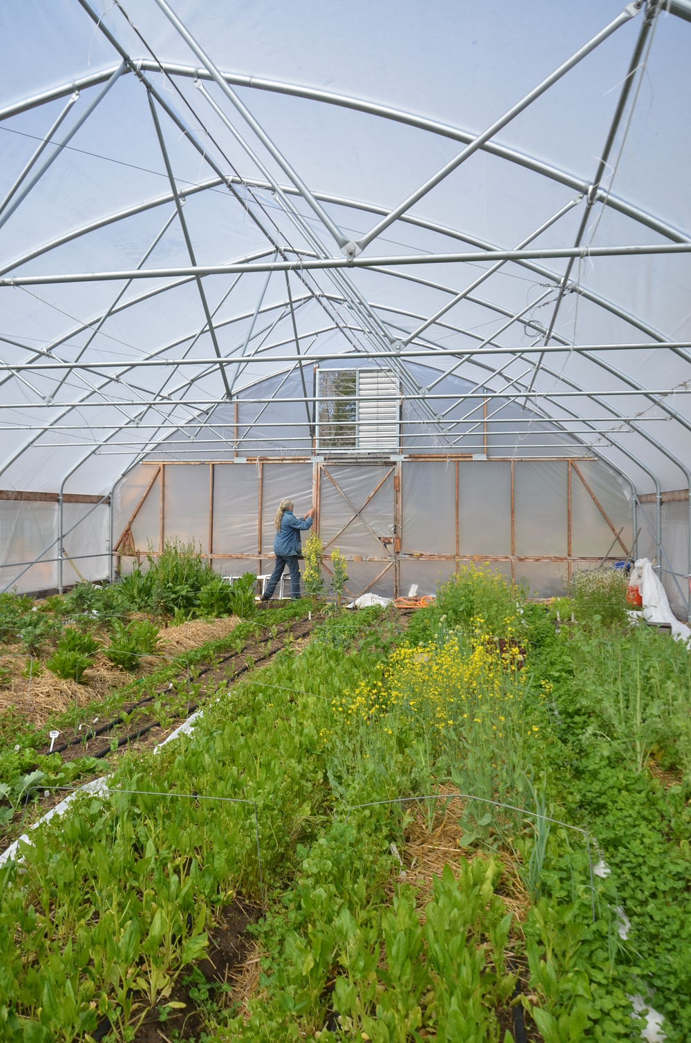 Opening up the greenhouse.JPG