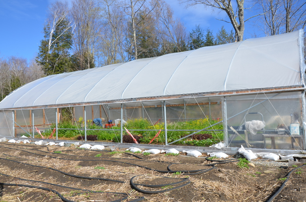 Greenhouse side view.JPG
