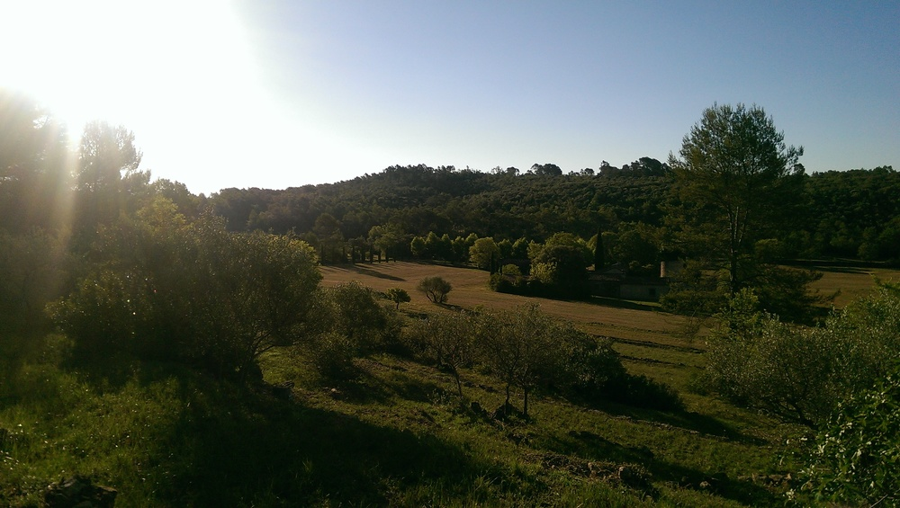 First morning. View from the olive terraces