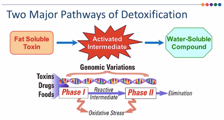pathways of detoxification 2.png