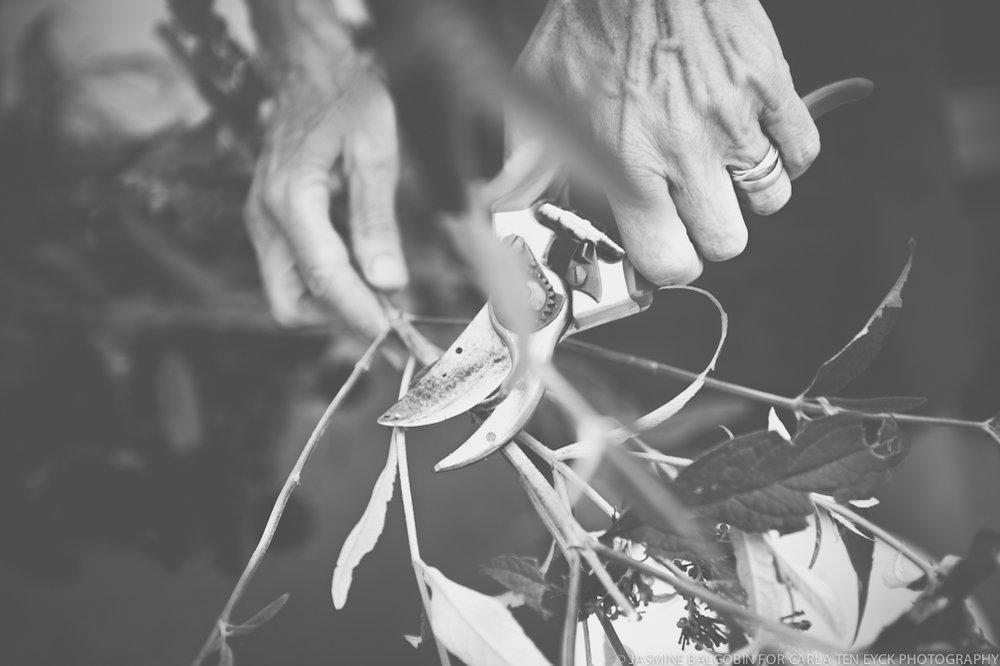 JASMINE_TARA_PHOTOGRAPHY_WHITE_GATE_WEDDING_UNIQUE_WEDDING_PHOTOGRAPHY_pruning sheers.jpg