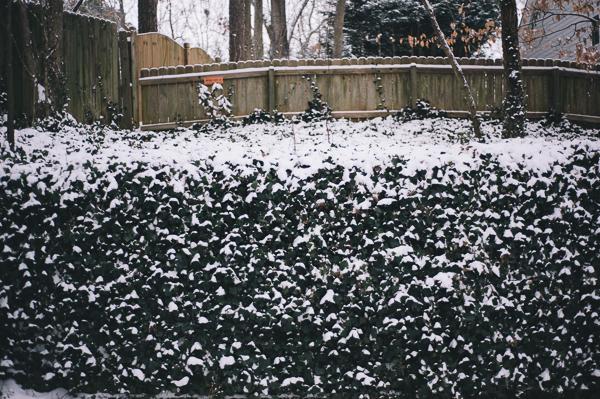 snowblog-1