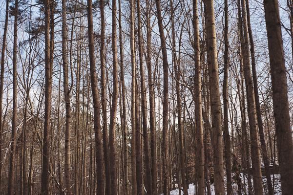 snowblog-18