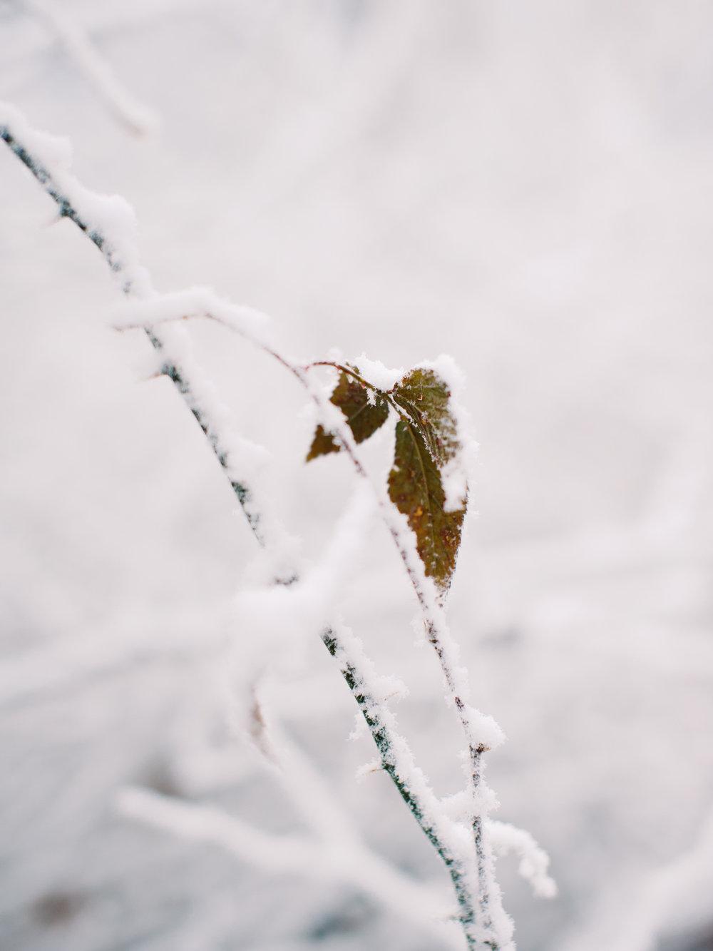 snowy-georgia-proposal-preachers-rock-atlanta-dahlonega-wedding-photographer-hannah-forsberg-fine-art-film-50.jpg