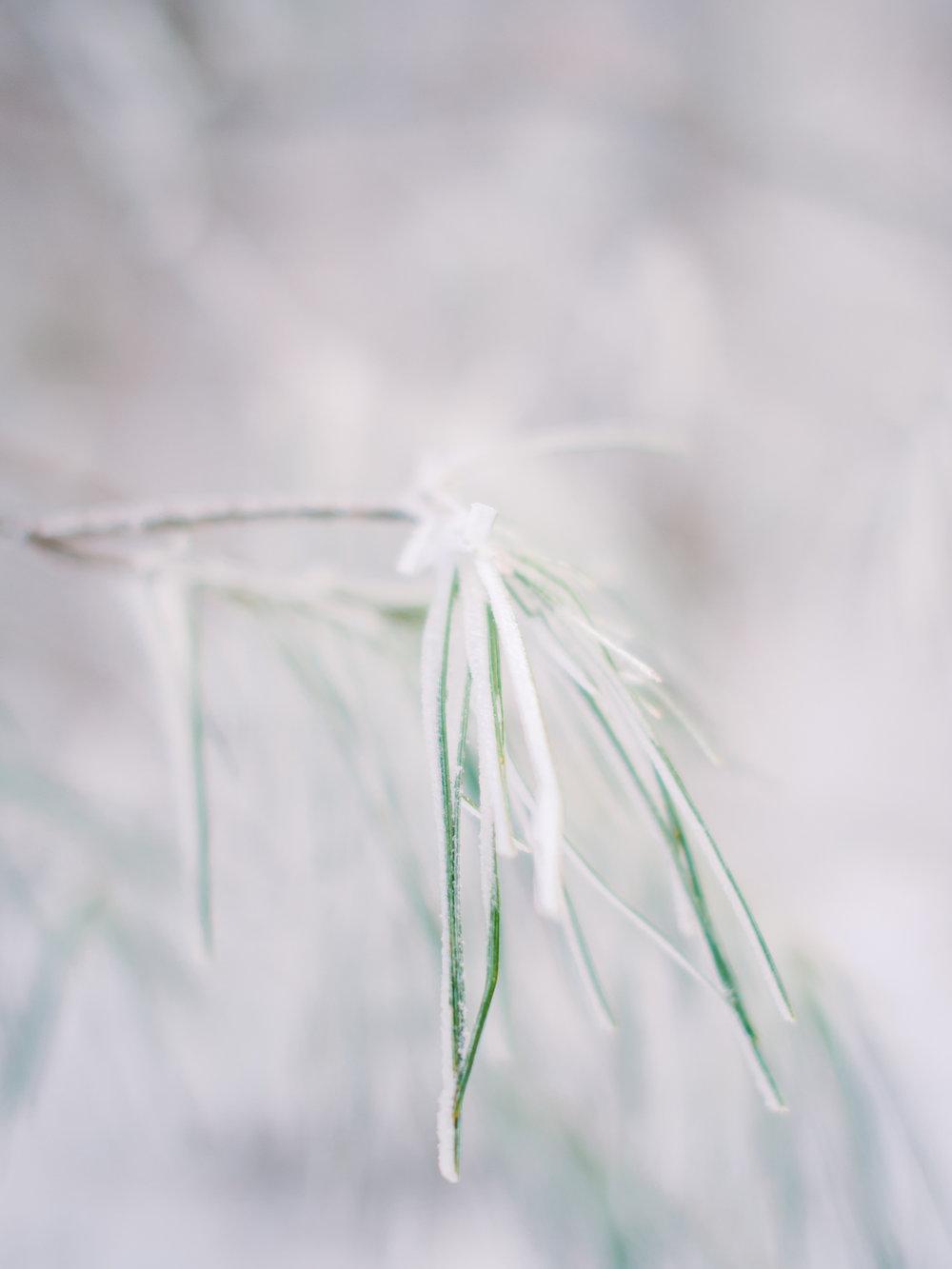 snowy-georgia-proposal-preachers-rock-atlanta-dahlonega-wedding-photographer-hannah-forsberg-fine-art-film-51.jpg