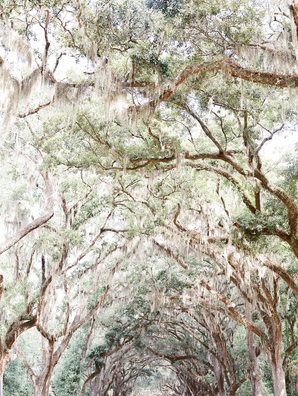 Lura-james-wormsloe-historic-site-hannah-forsberg-atlanta-wedding-photographer-22.jpg