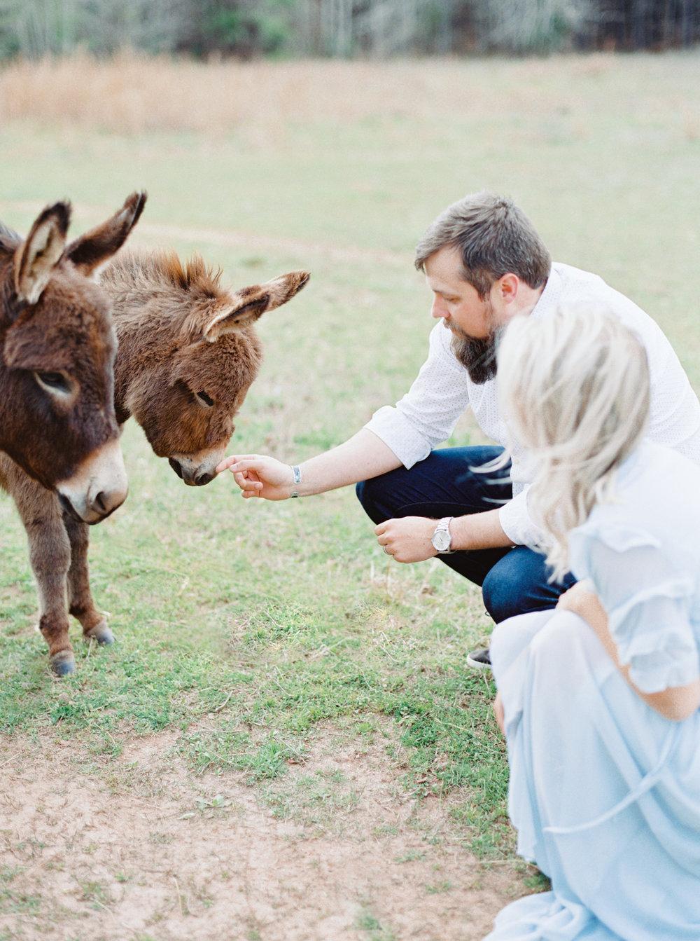 hannah forsberg atlanta wedding photographer whitney spence anniversary session with miniature donkeys and horse-10.jpg