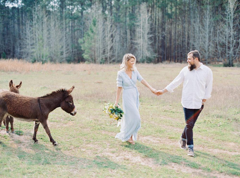 hannah forsberg atlanta wedding photographer whitney spence anniversary session with miniature donkeys and horse-12.jpg