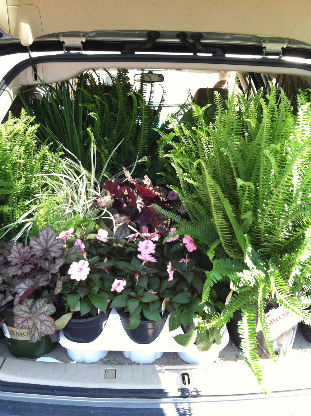 Our car loaded down from Lowe's! Such fun!