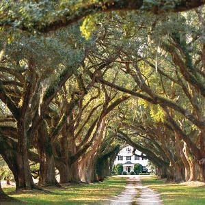 plantation 2.jpg