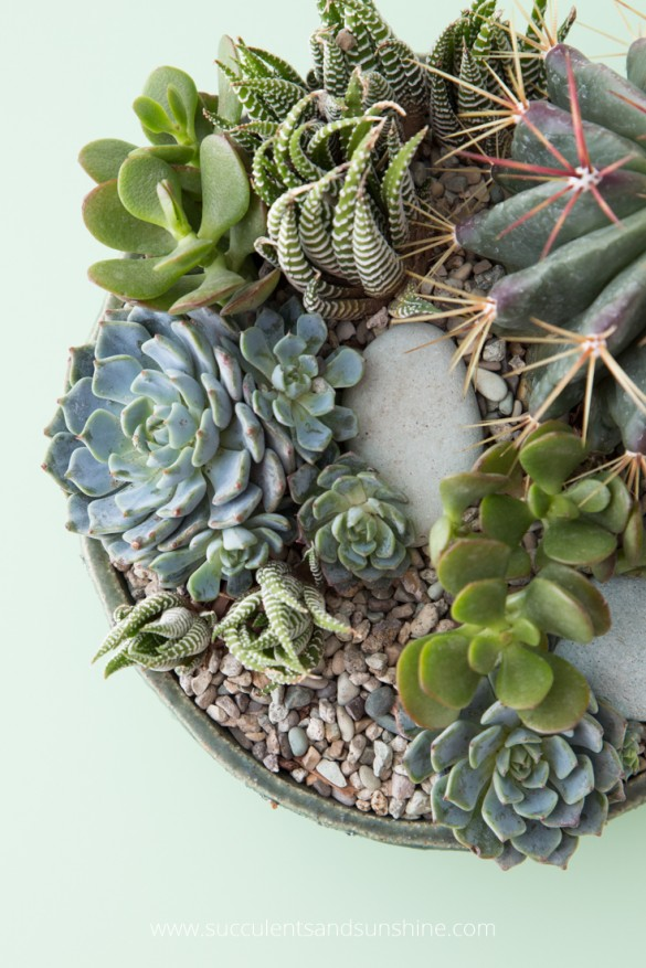 Taking Care Of Your Succulents Renovate