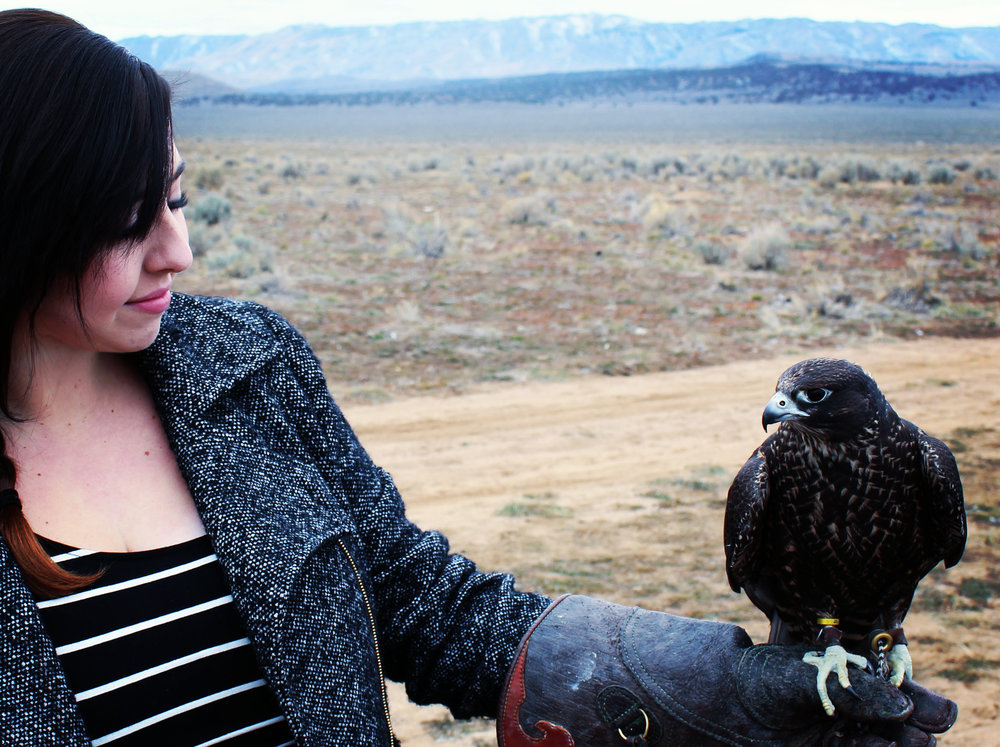 Doing field research for an article about falconry.