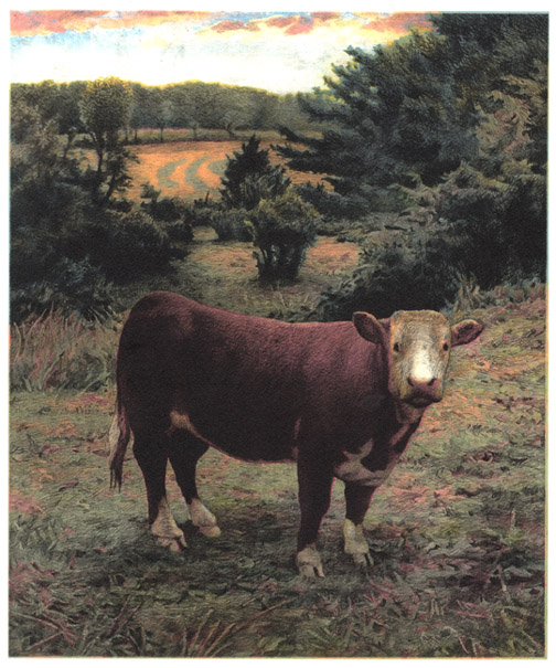 Cow,  2005 pigment ink and intaglio print, 13 x 11 inches edition of 30