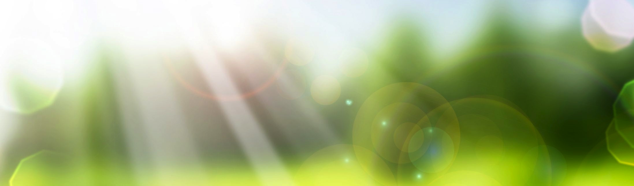 best ever bug repellent spray u2014 kill bugs naturally