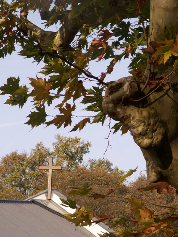 pl_2011_automne_003.jpg