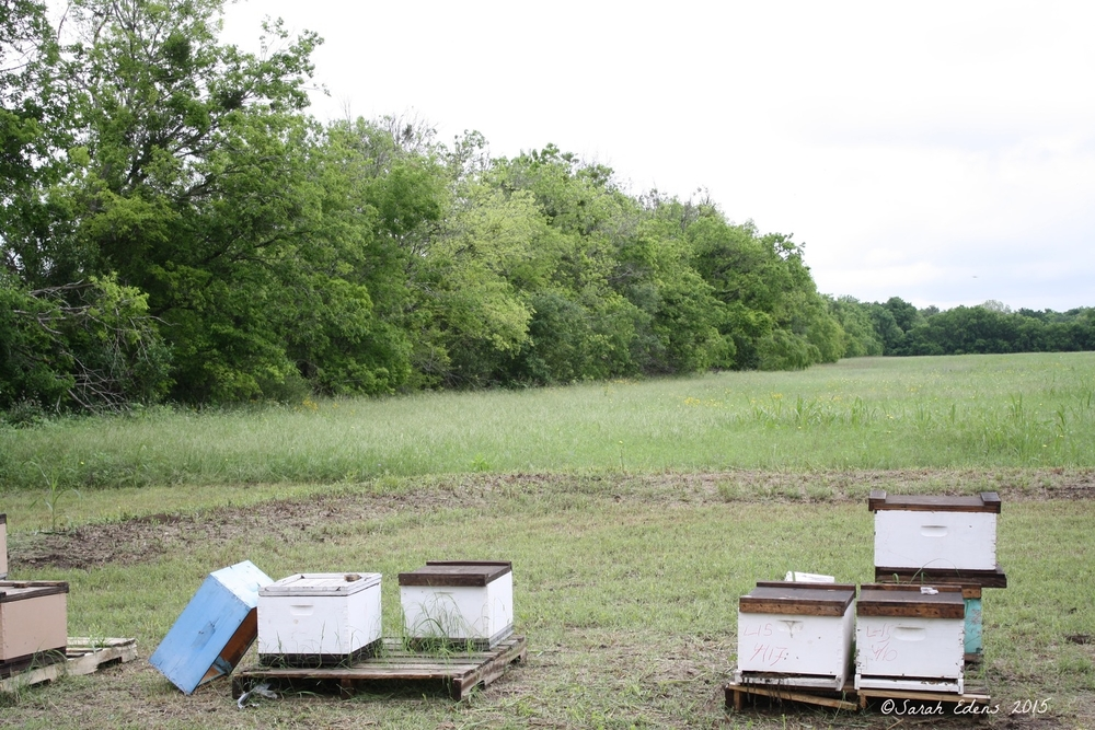 Bee Hives at Gretchen Bee Ranch!