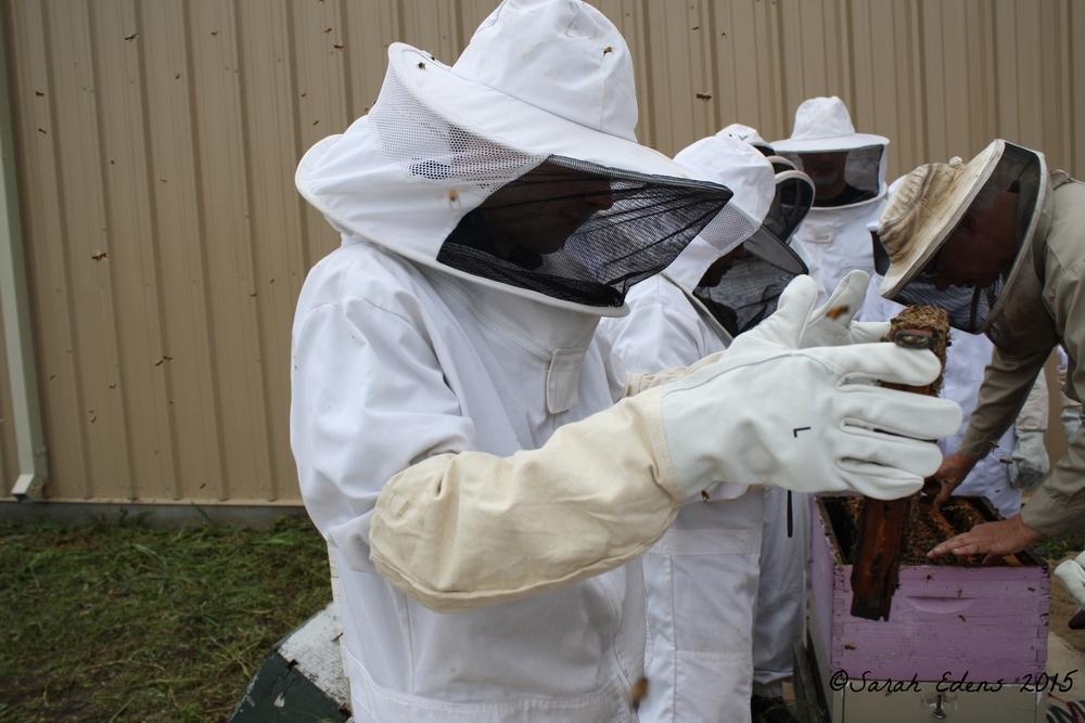 Hubby examining the bees