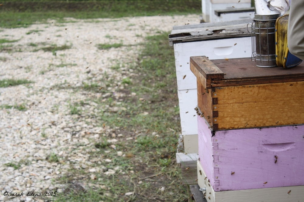 hives post-class.jpg